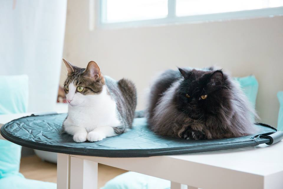 Image result for cats tearoom