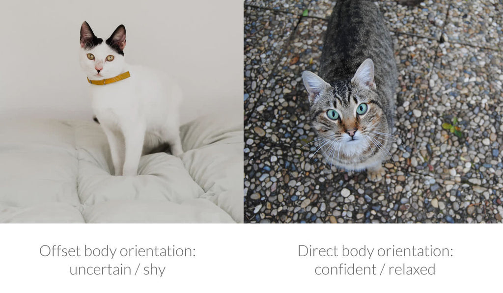 Cat Body Orientation