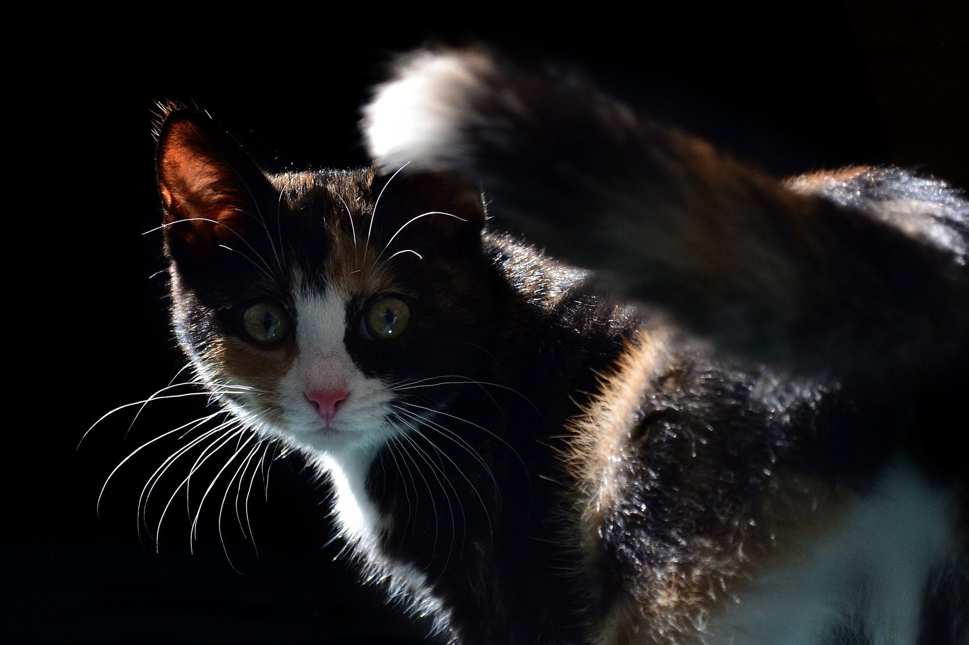 A Beginners Guide to Cat Behavior | Tuft + Paw