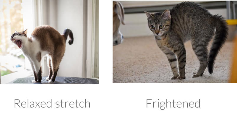 cat stretch vs arch