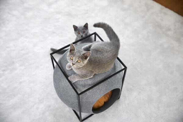 Cube Cat Bed - Tuft + Paw