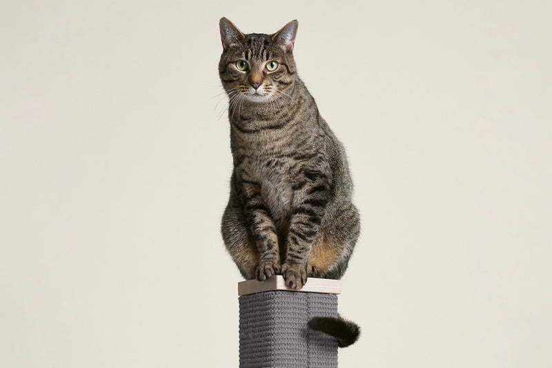 Zip (switch to live on launch) Scratching Post - Tuft and Paw