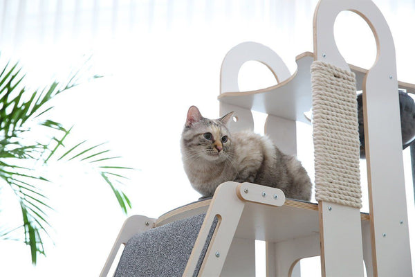 Milo (push live on launch Cat Tree - Tuft and Paw