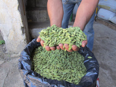 Cardamom Pods JUMBO Grade Natural Hand Selected