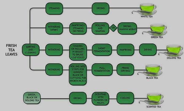 Tea Processing Flow Chart Green Tea Oolong and Black Tea