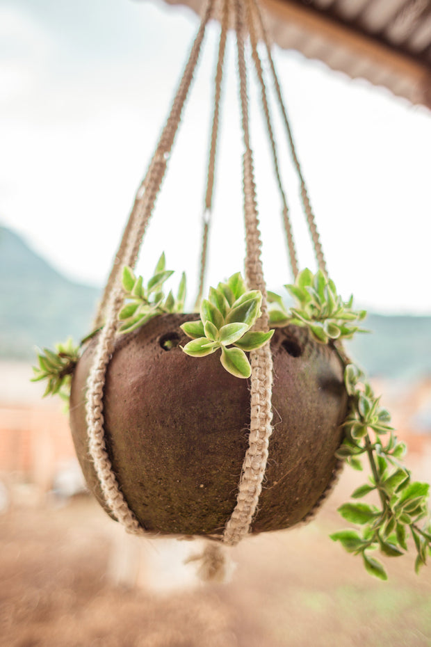 Full Circle Plant Hangers - Mango + Main