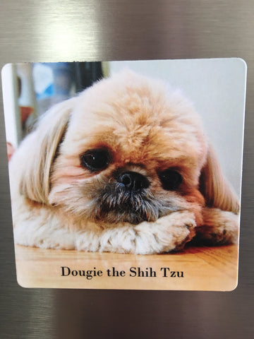 Dougie Magnet- Chin on Paw