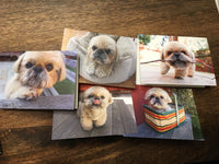 Blank Note Cards - New Item!