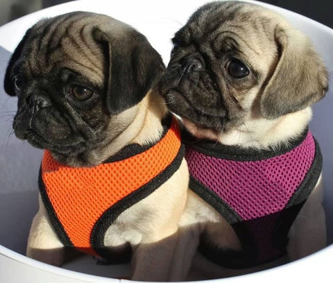 Vest Harness for Dogs