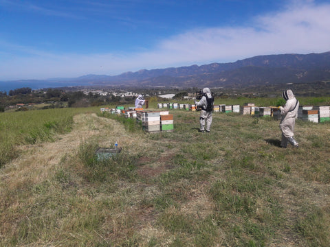 Honey Pacifica Beehives