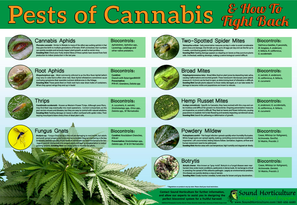 Pests of Cannabis Poster, 18