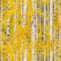 Landscape Medley Gold Birch Aspen Trees Elizabeths Studio #7804 - Quilting & Sewing Fabric