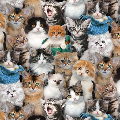 Multi Cats & Kitten Breeds Elizabeths Studio #7619 - Quilting & Sewing Fabric