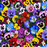 Packed Lovely Pansies Floral Elizabeths Studio #7550 - Quilting & Sewing Fabric