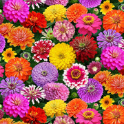 Packed Zinnias Multi Floral Elizabeths Studio Fabric #7745 - Quilting & Sewing Fabric