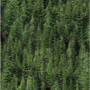Roaming Wild Trees Allover Green Nature Wilmington Prints #7684 - Quilting & Sewing Fabric