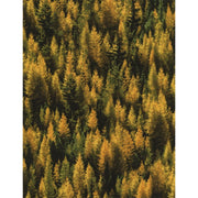 Tamarack Trees Landscape Nature Outdoors Timeless Treasures #5257 - Quilting & Sewing Fabric