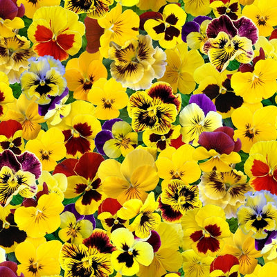 Yellow Lovely Pansies Allover Floral Elizabeths Studio Fabric #7743 - Quilting & Sewing Fabric