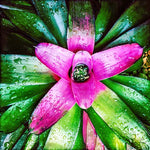 Bromeliad - Lisa Faire Graham Fine Art Photography - Pix Synergy LLC