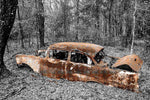 "A rusting vintage 1950s-era Chevrolet Bel Air is ""grounded,"" moored amid black and white foliage."