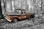 A rusting vintage 1960s-era Ford pickup amid a backdrop of black & white foliage.