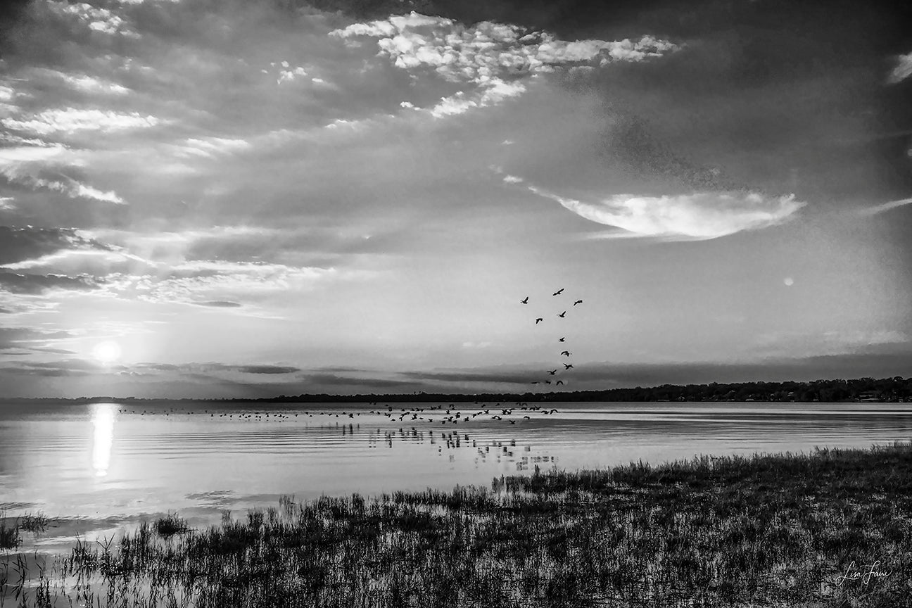 Sunset on Lake Minnehaha with birds in flight, rendered in black and white