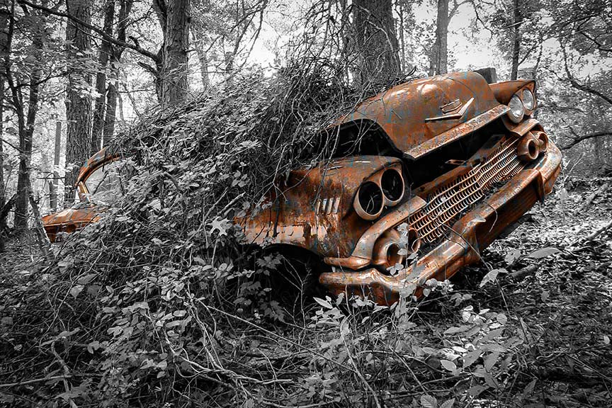 Uprooted - Lisa Faire Graham Fine Art Photography - Pix Synergy LLC