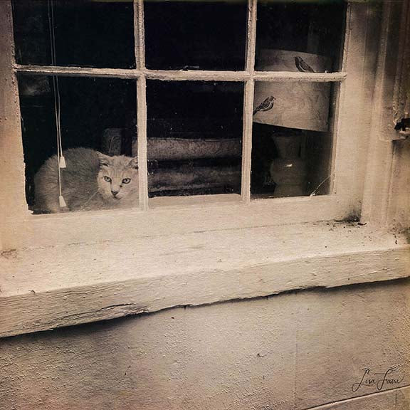 Cat Window Shopping is a whimsical view of an inquisitive cat gazing at the world, with large, expressive eyes of wonder. By Lisa Faire Graham