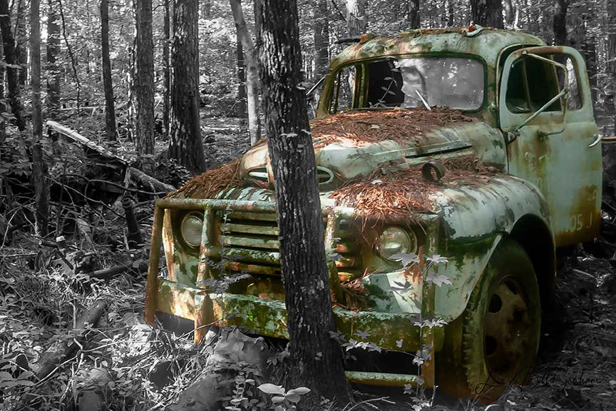 Antique Wrecker amid black and white foliage