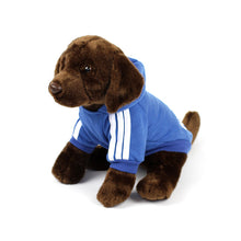 ADIDOG Hoodie in Royal Blue by The Paw Wag Company