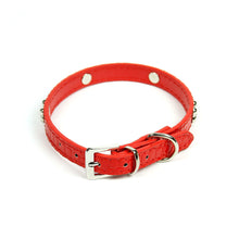 Dog Bone Collar in Red by The Paw Wag Company