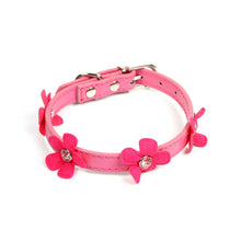 Daisy Collar in Fuschia by The Paw Wag Company