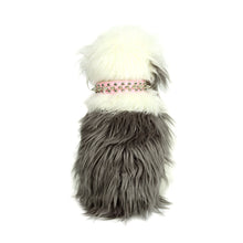 Petite Spiked and Studded Collar in Pink by The Paw Wag Company