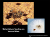 The role of fungi in biodiversity and the health of honeybees.