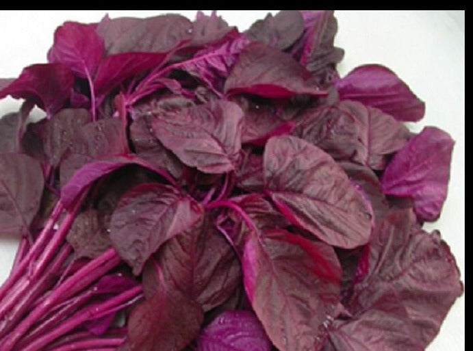Amaranth-Callaloo Red (Organic)