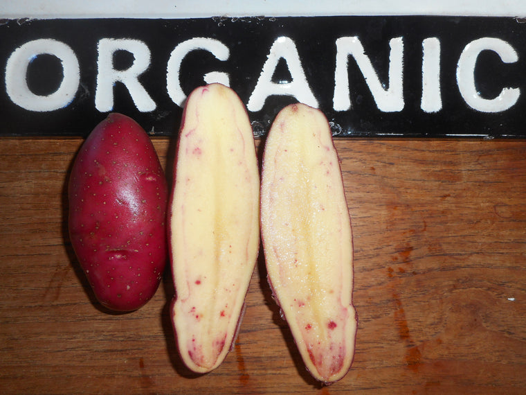 Potato-French Fingerling (Organic)