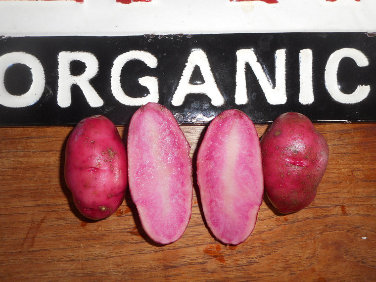 Potato-Red Thumb (Organic)