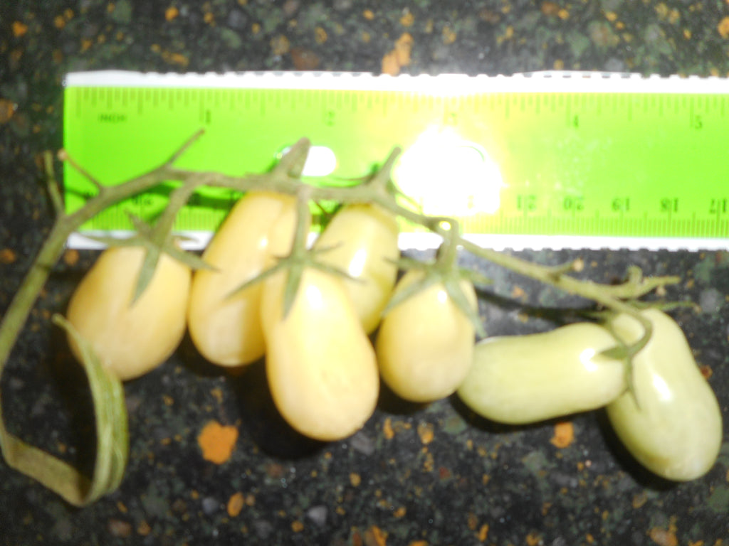 Tomato-Yellow Grapelet (Organic)