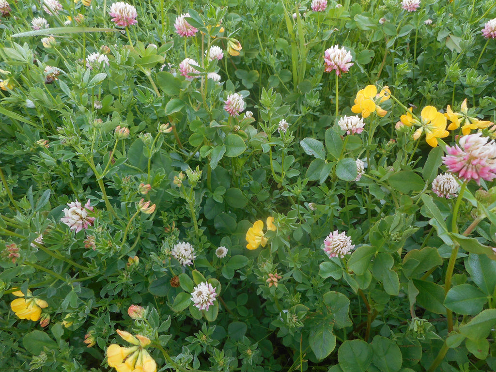 Cover Crop-Pollinator Nectar mix (Organic)