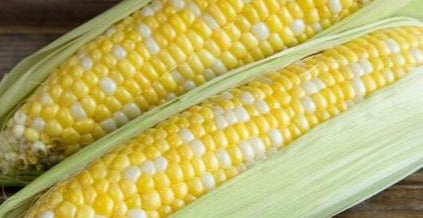 Corn-Early Bi-colour