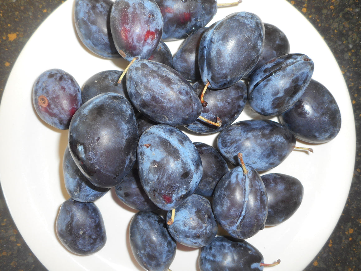 Tree-Damson plum