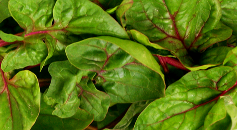 Spinach-Red thread