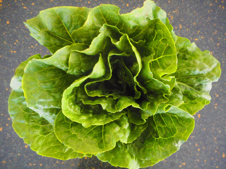 Lettuce-Romaine-Arrow -Pelleted