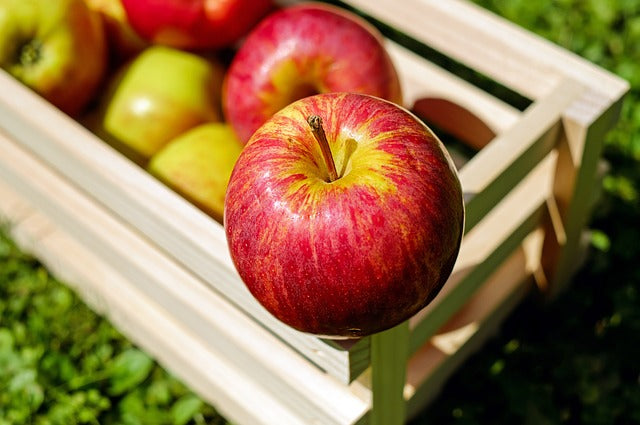 apple picking fall activities