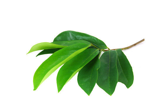 Herbal Graviola soursop Leaves