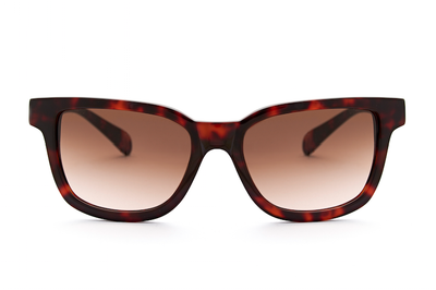 CIRO HAVANA - Glasses - EstablishedStore.com