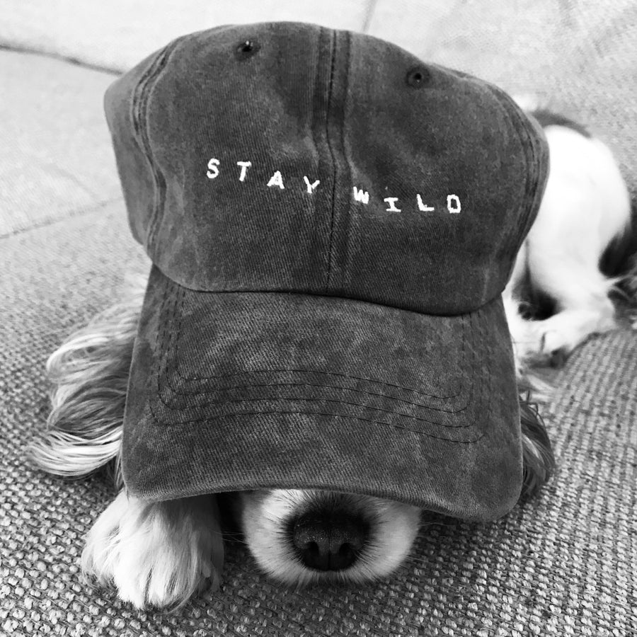 stay wild hat - dog in hat - atticus poetry