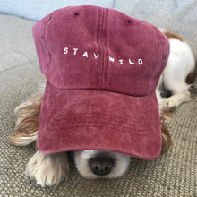 stay wild hat - dog wearing hat - atticus poetry
