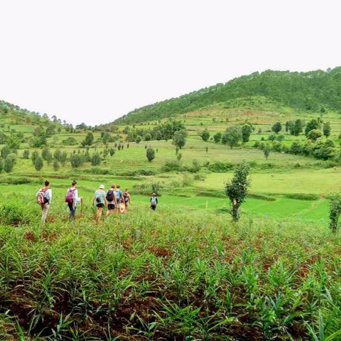 Day Return Trekking in Kalaw - Alamanda Travels, Myanmar