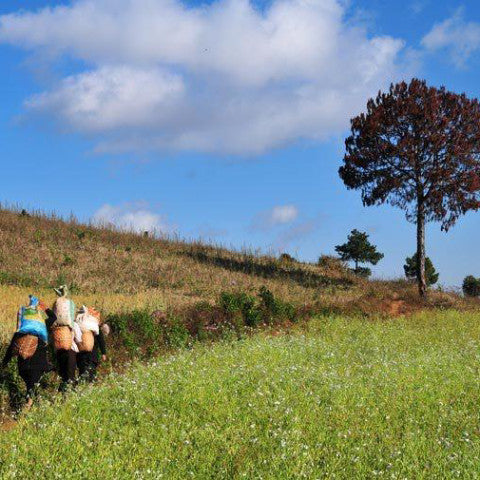 Kalaw to Inle Lake, Trekking Tour - 3D/2N - Alamanda Travels, Myanmar